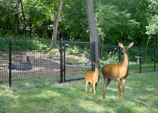 Can fencing protect my property from wildlife?