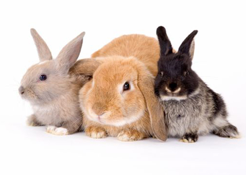 Can a Fence Keep Rabbits Out of My Garden?
